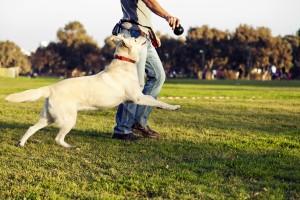 Viel Freiraum für Hunde